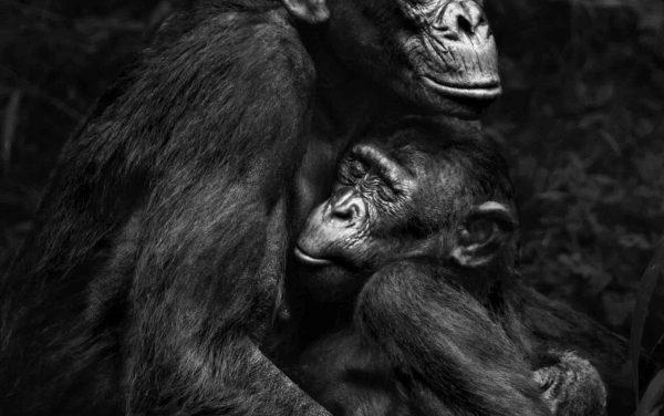 Primates – Isabel Muñoz