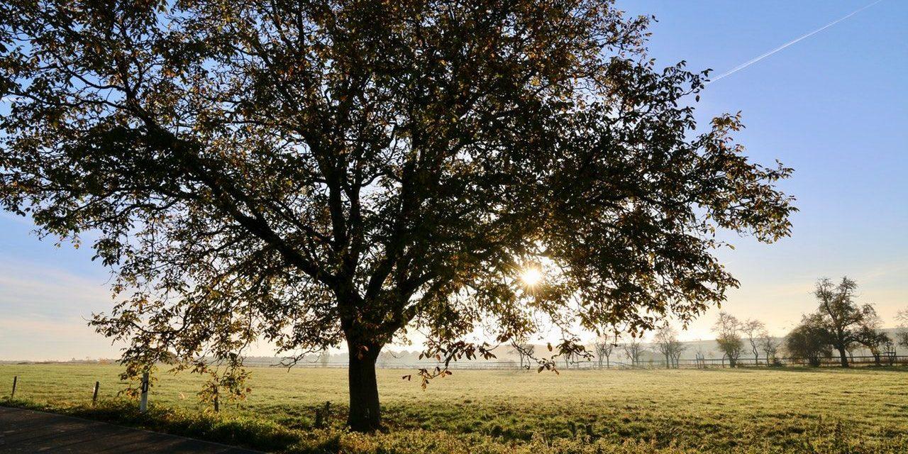 El árbol que no sabía quién era