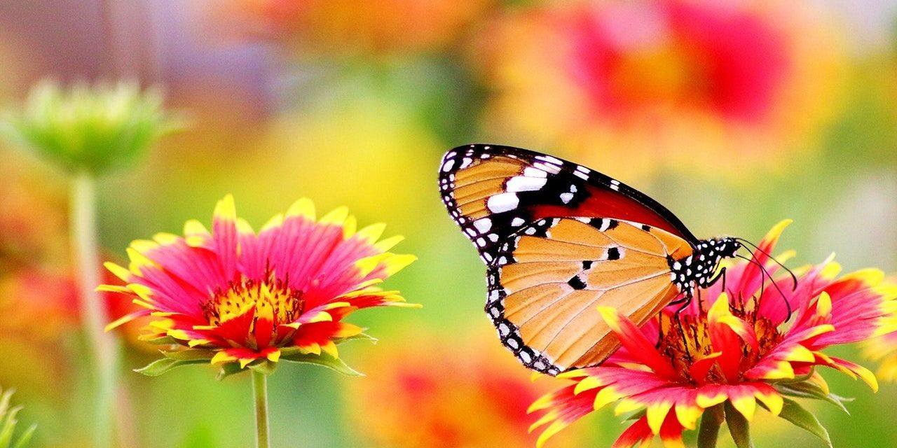 La mariposa atraída por la vela