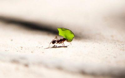 Diálogos: Sé hormiga, no cigarra
