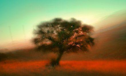 Meditaciones: Soñar que despertamos